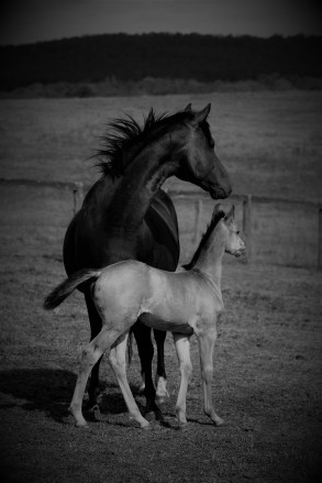 foal and mum