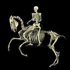 EquefittSkeleton1